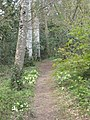 A woodland path on the Trewithen Estate - geograph.org.uk - 1261133.jpg