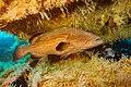 Abrolhos Marine National ParkRobertoCostaPinto18.jpg