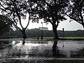 Acad Oval, Sunken Garden, U.P. Diliman, Quezon City.jpg