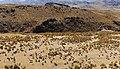 Alpaca-herding-Mollepunko-caves-callalli.jpg