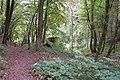 Alter Stolberg - Karstwanderweg oberhalb der Heimkehle.jpg