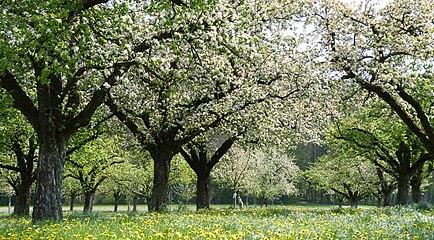 Altnau-Thurgau-Spring.jpg