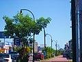 Alvaro Obregón Avenue, Chetumal, Q. Roo - panoramio (1).jpg