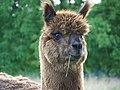Am I cute or what^ - geograph.org.uk - 509441.jpg