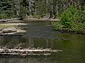 American River 16075.JPG