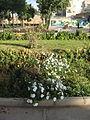 Amin al-Islami Park - Trees and Flowers - Nishapur 059.JPG