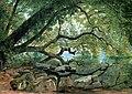 An Ilex Tree on Lake Albano, Italy 1846 John F Kensett.jpg