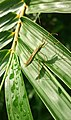 An Insect on the leaf.jpg