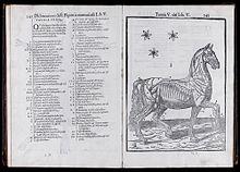 C. Ruini - Anatomia del Cavallo (1618)