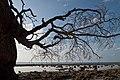 Andaman Islands, Setting sun and tree on the beach.jpg