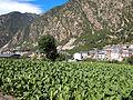 Andorra la Vella - plantation.jpg