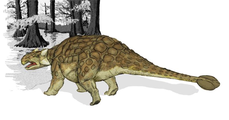 Bild eines Ankylosaurus