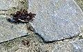 Ant attack (14696641068).jpg