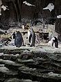 Antarctica- Empire of the Penguins (36448681864).jpg