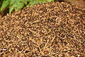 Anthill in Forest of Dean near Symonds Yat (9791).jpg