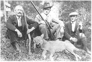 "Province of Belluno - Gray wolf killed at Malga Campo Bon (Comelico) on 24th May 1929 by Antonio ""Tunin"" Mina."