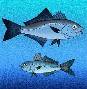 Archaeus - Image: Archaeus species