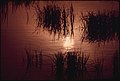 Arctic Pond with Characteristic Long Grasses. Near Mile 0 Alaska Pipeline Route 08-1973 (3971196509).jpg