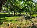 Area verde - panoramio (1).jpg