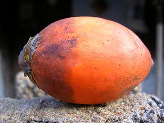 Areca nut - A ripe areca nut.