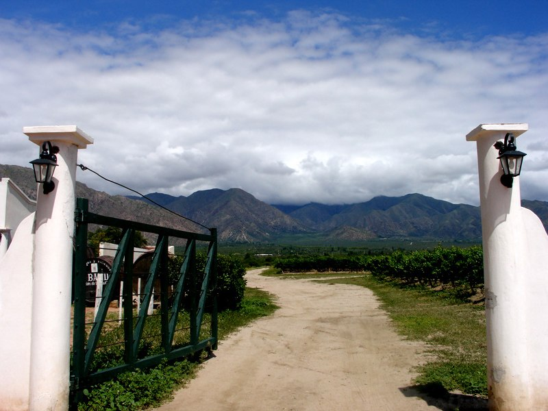 Argentine vineyard and mountains.