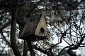 Artificial nest (2062312593).jpg