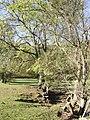 Ash trees in Cwm Sorgwm - geograph.org.uk - 588549.jpg