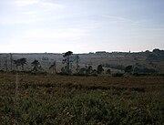 Ashdown Forest View.jpg