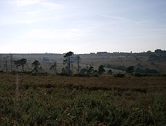 Ashdown Forest View.jpg