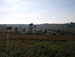 Ashdown Forest - Ashdown Forest near Greenwood Gate Clump