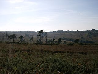 Ashdown Forest heathland area in the county of East Sussex