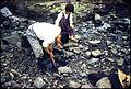 Ashiya-machi, Onga-gun, Fukuoka Prefecture - Clam Digging - 1955.jpg