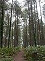 Ashley, Ringwood Forest - geograph.org.uk - 1442102.jpg