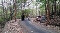 Asurankund Deep Forest - panoramio (2).jpg