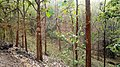 Asurankund Forest @ Summer - panoramio (1).jpg