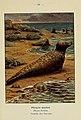 Atlas de poche des mammifères de France, de la Suisse romane et de la Belgique (Pl. 41) (6312170146).jpg