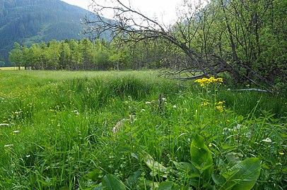 Auenmoos, Hochmoor, Metnitz, Bezirk Sant Veit an der Glan, Kärnten.jpg