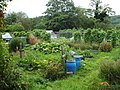 August crops at Bakewell Allotments - geograph.org.uk - 1468812.jpg