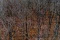 Autumn Leaves Fallen PLT-TR-FT-3.jpg