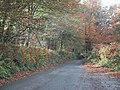 Autumn colours by the road over Hare Down - geograph.org.uk - 1558292.jpg