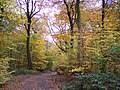 Autumn foliage at Haigh Woodland Park in Greater Manchester.jpg