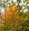 Autumn scene at Woodleigh (7 of 7).jpg