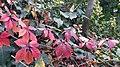 Autumn season in Butanic Garden فصل پاییز در باغ بوتانیکال تفلیس 48.jpg