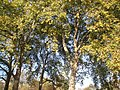Autumnal colours - geograph.org.uk - 1573368.jpg