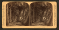 Avenue of Cocoanut palms. Florida, from Robert N. Dennis collection of stereoscopic views.png