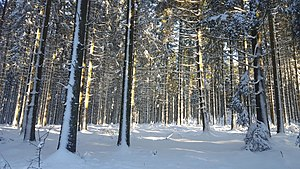 Immagine Bérismenil-Forest in snow (3).jpg.