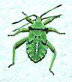 BUG, sp (8-28-2014) 78 circulo montana, patagonia lake ranch estates, scc, az -03 (15075736985).jpg