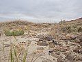 Badlands National Park - Sage Creek Basin cactus and rocks.jpg