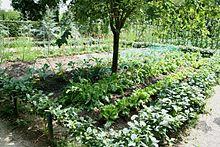 type de jardin potager