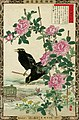 Bairei kachō gafu, Spring 15, China rose and common hill mynas.jpg